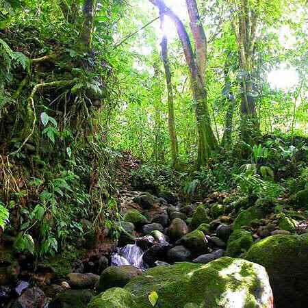 Parque Nacional La Avellana, Costa Rica