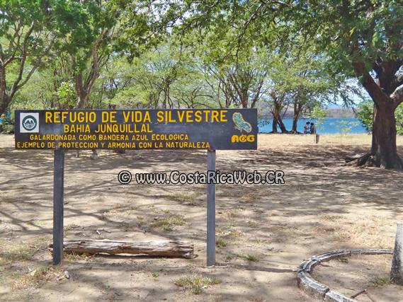 wildlife of costa rica pdf