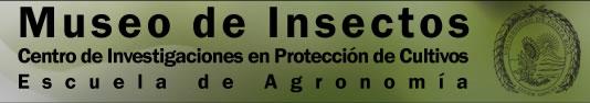 Museo de Insectos de la Universidad de Costa Rica