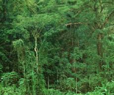 Reserva Biológica Hitoy-Cerere de Costa Rica