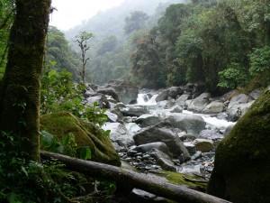 Reserva Forestal Río Macho en Costa Rica
