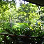 Room View - Rafiki Safari Lodge Hotel Costa Rica
