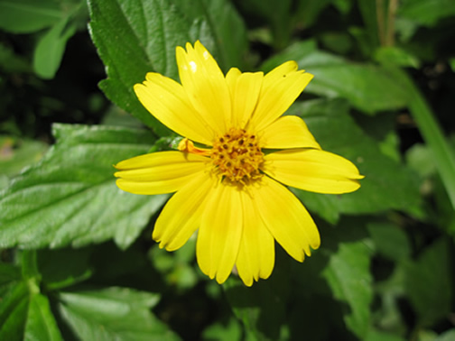 Jabillos Flower, San Carlos, Alajuela, Costa Rica